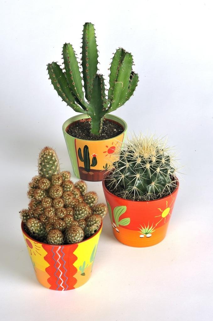 cactus-520310_1280