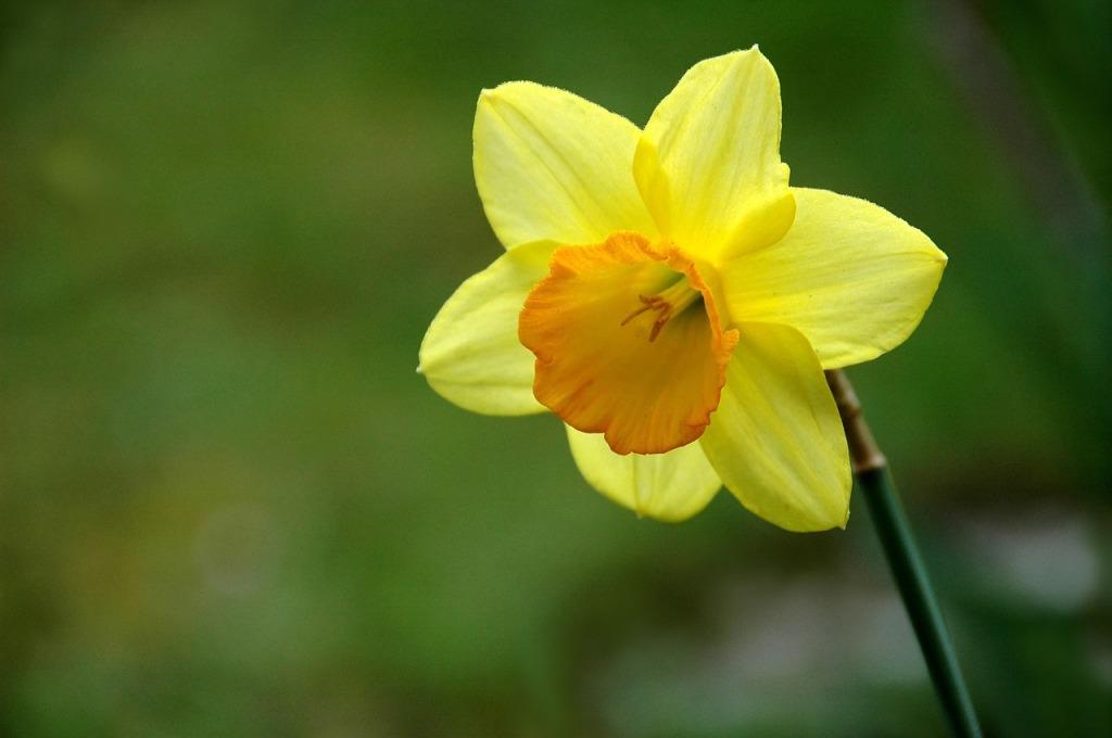 flower-661585_1280