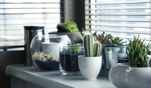 pots-716579_640