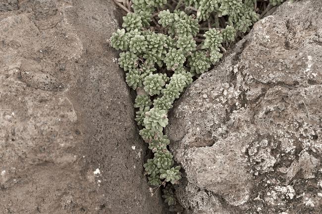 Tento obrázek nemá vyplněný atribut alt; název souboru je skalka-kameny-1-2.png.